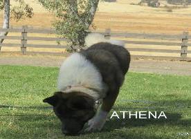 ATHENA_101-351x201.jpg