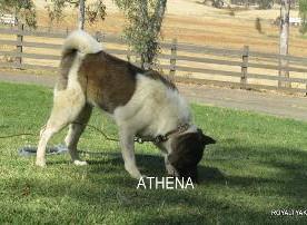 ATHENA_100-315x202.jpg