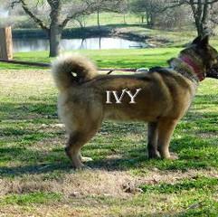IVY_82-424x258.jpg