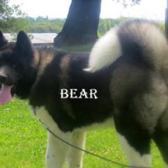 BEAR_9-503x276.jpg