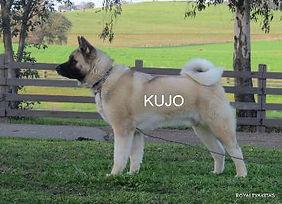 KUJO_203-355x257.jpg