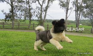 CEASAR_152-300x181
