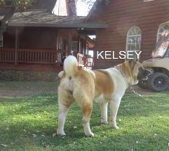 KELSEY_100-354x216.jpg