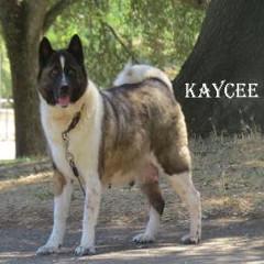KAYCEE_5002-405x262.jpg