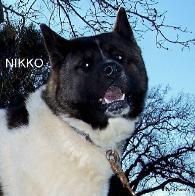 MR_NIKKO_1-195x196.jpg