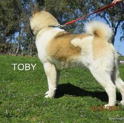 TOBY_103-350x314.jpg