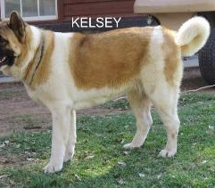 KELSEY_104-360x211.jpg