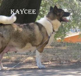 KAYCEE_503-476x261.jpg