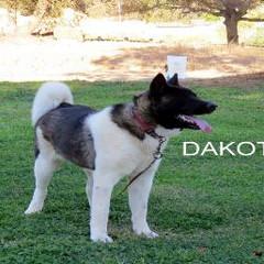 DAKOTA_609-412x257.jpg