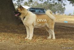 DIVA_503-245x167.jpg