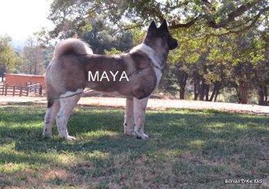 MAYA_509-330x232.jpg