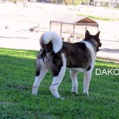 DAKOTA_605-406x254.jpg