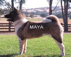 MAYA_504-300x195.jpg