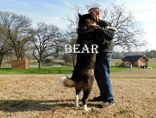 BEAR_803-313x238.jpg