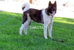 DAKOTA_606-254x173.jpg