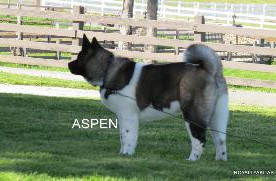 ASPEN_503-285x181.jpg