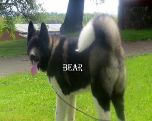"ROYALTY'S MAJESTIC WARRIIOR                   ""BEAR"""