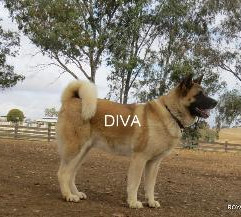 DIVA_102-318x217.jpg