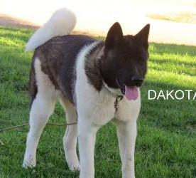 DAKOTA_603-387x250.jpg