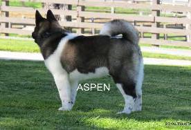 ASPEN_502-300x188.jpg