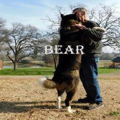 BEAR_803-398x258.jpg