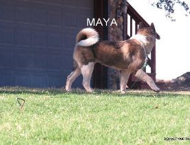 MAYA_501-295x210.jpg