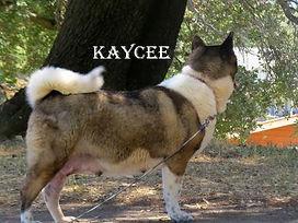 KAYCEE_5042-404x303.jpg