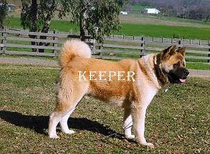 KEEPER_83-334x246.jpg