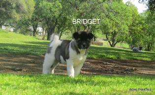 BRIDGET_251-315x192