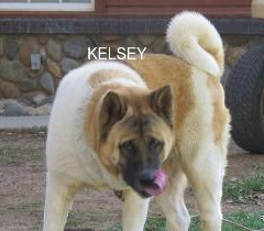 KELSEY_101-345x210.jpg