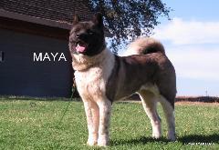 "ROYALTY'S QWEEN MAYA               ""MAYA"""