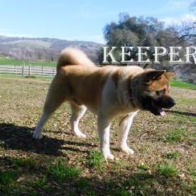 KEEPER_80-455x281.jpg