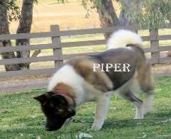 PIPER_500-317x196.jpg