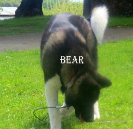 BEAR_10-394x266.jpg