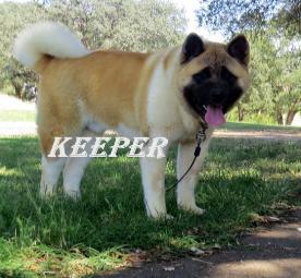 KEEPER_86-405x255.jpg