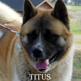 TITUS_809-425x528.jpg