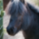 wildlife-dusty-the-pony.png