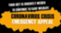 coronavirus-crisis-appeal.png