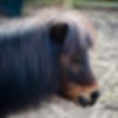 wildlife-zippy-the-pony.png