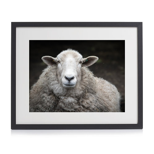 Sheep Print by Juliet Hedges-Robin