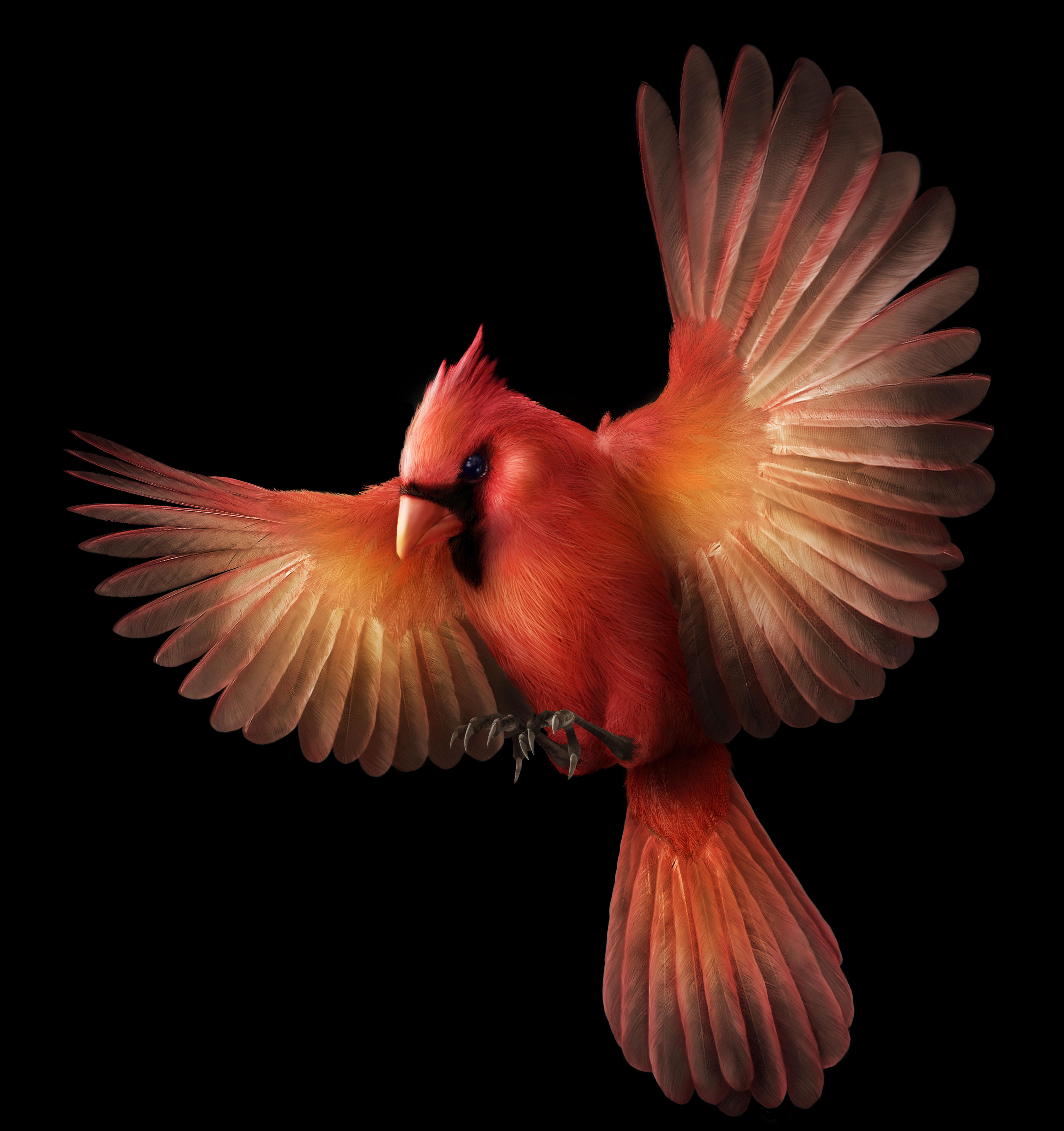 Cardinal bird final_MW VER