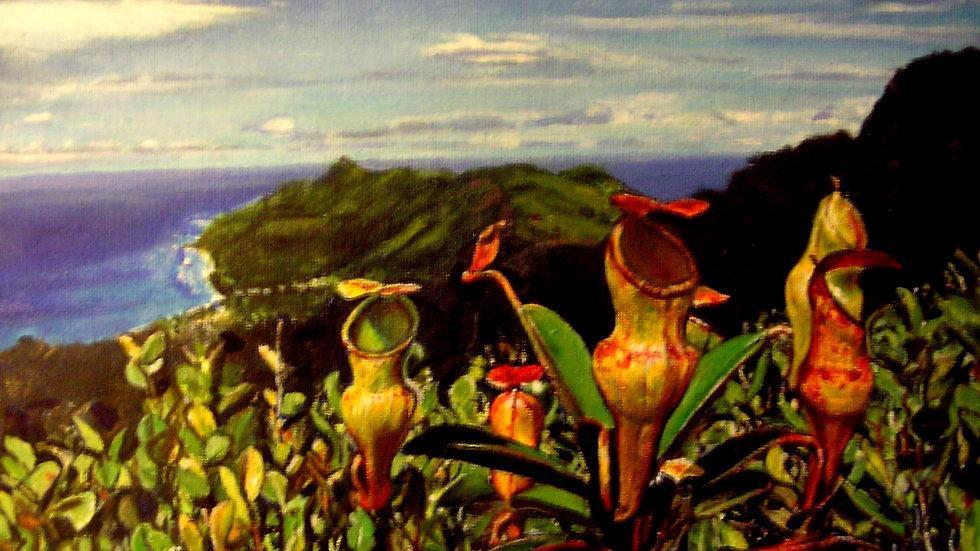 David Vigon - Pitcher Plants