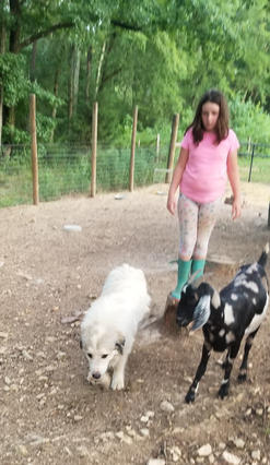 Great Pyrenees are great with kids