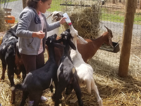We have just a few baby goats playdates available for the weekend of 1/30.