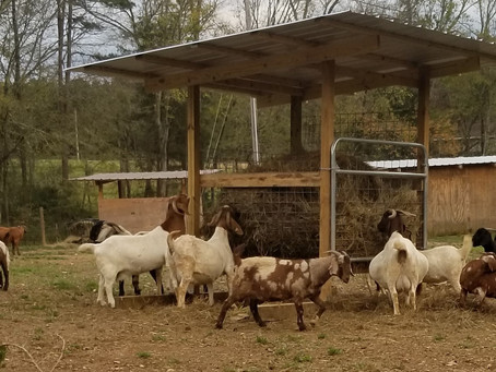 Will this hay feeder work for goats?