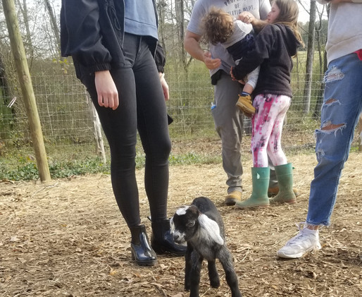 Baby goat play date petting zoo mt pleas