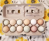 Cotton Bean farms eggs sale mt pleasant