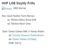 HHF lge Daylily Frills.JPG