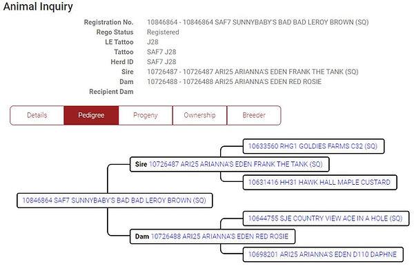Muffs ABGA registration Info.JPG