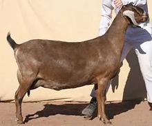 Black Mesa Celete's Carmella 5M..JPG